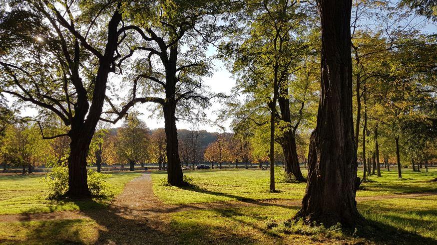 Stadt-Wald-Wanderung von Schlebusch nach Thielenbruch